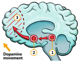 Dopamine Release in the brain triggering feel good emotions